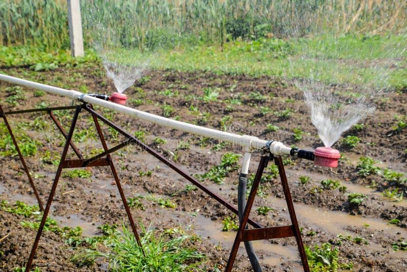 Arroseuse de l'eau pour arroser dans le jardin arrosage de jardin images stock