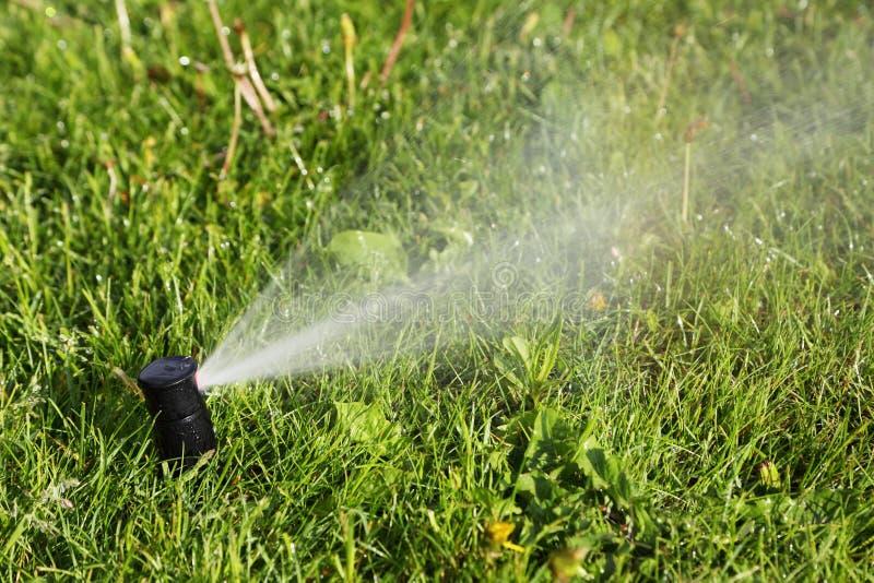 Arroseuse facilitant l'alimentation en eau à la pelouse photo stock