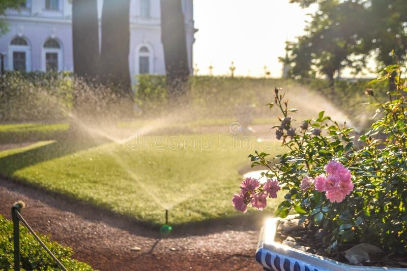 Arroseuses de jour ensoleillé et d'irrigation au jardin d'été, St Petersburg photographie stock libre de droits