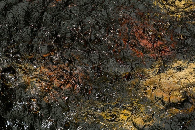 Arrosez la baisse de pluie d'éclaboussure dans l'étang à poissons avec des poissons de couleur photo libre de droits