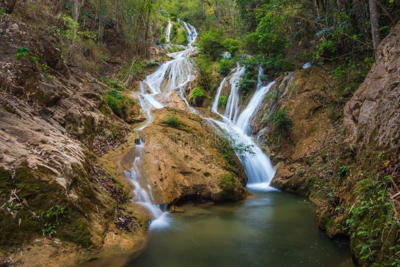 Arrosez la saison de chute au printemps située dans la jungle profonde de forêt tropicale image stock