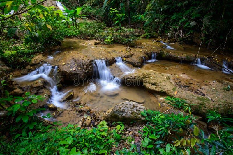 Arrosez la saison de chute au printemps située dans la jungle profonde de forêt tropicale photo stock
