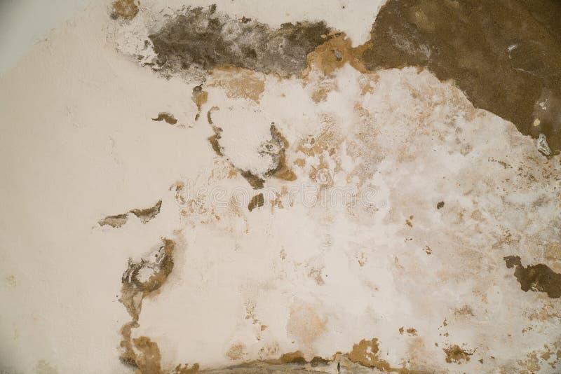 Arrosez les dommages et moulez sur le plafond dans le Mamluks sur l'Esplanade des mosquées à Jérusalem image stock
