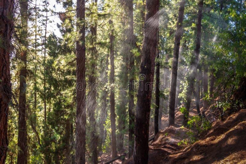 Arrosez sur une forêt de pin à Cerro de la Gloria au Général San Martin Park - Mendoza, Argentine image libre de droits