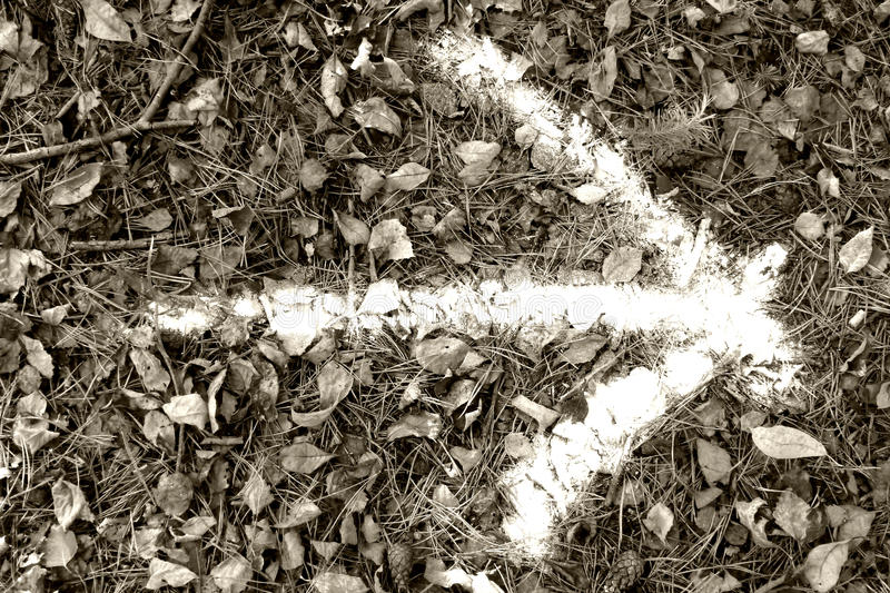 Download Arrow on floor of forest stock image. Image of nature - 27539523