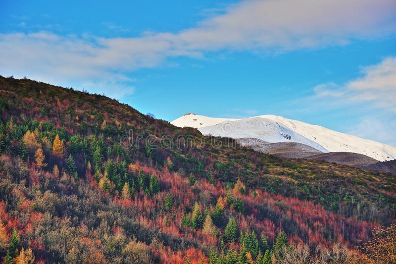 Arrowtown Colorful trees winterscape hillside stock images
