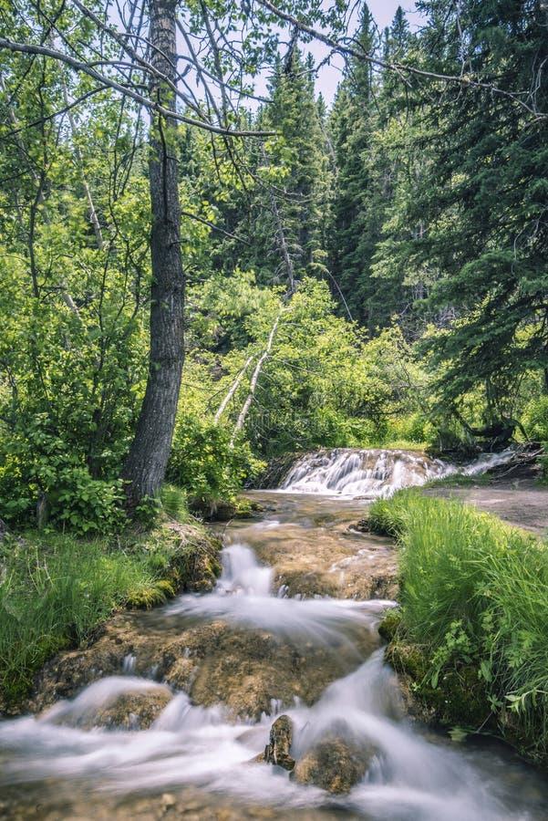 Arroyo de Babling a través de árboles imagen de archivo