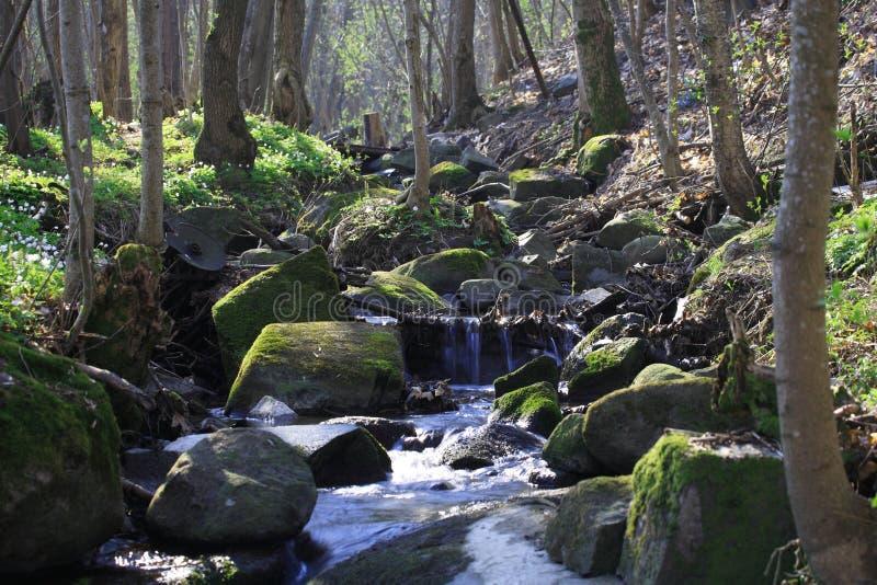Arroyo en un bosque imagenes de archivo
