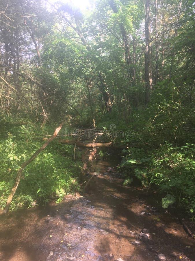 Arroyo en un bosque del verano imagen de archivo