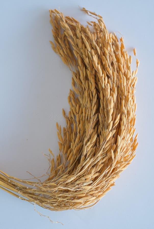 arroz fotos de stock