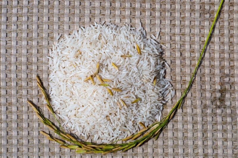 Arroz blanco y arroz marrón imágenes de archivo libres de regalías