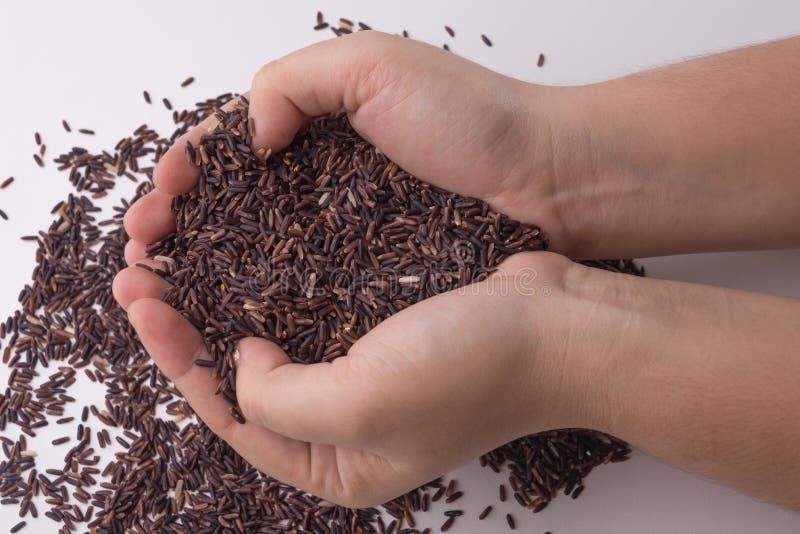 Arroz da baga do arroz em guardar das mãos fotografia de stock royalty free
