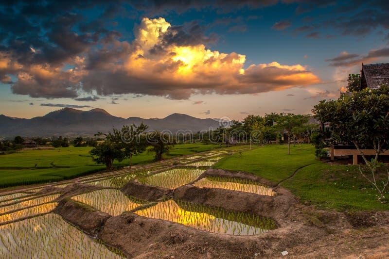 arroz da exploração agrícola fotografia de stock