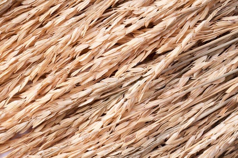 Arroz de arroz en el fondo blanco oídos del arroz de arroz foto de archivo libre de regalías