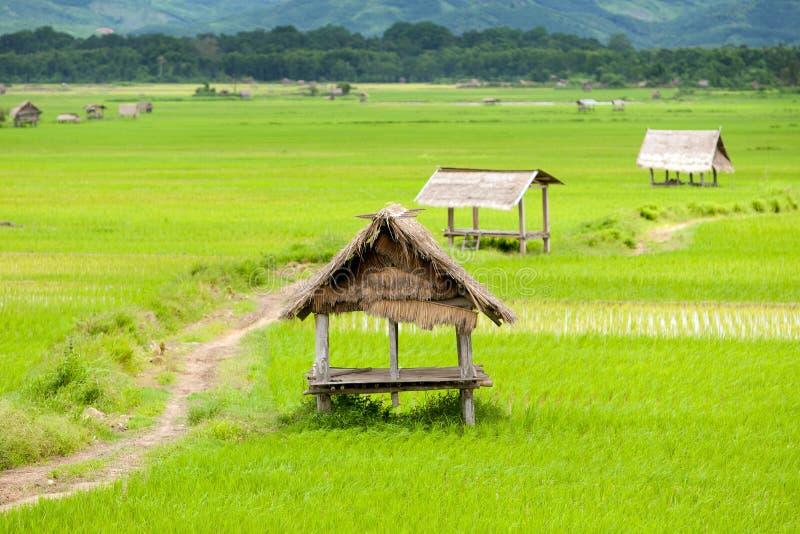 Arroz de arroz en el valle del namtha del luang, Laos imágenes de archivo libres de regalías