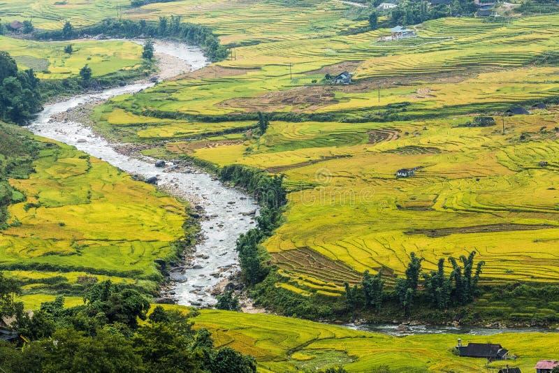 Arroz de arroz en Vietnam fotos de archivo