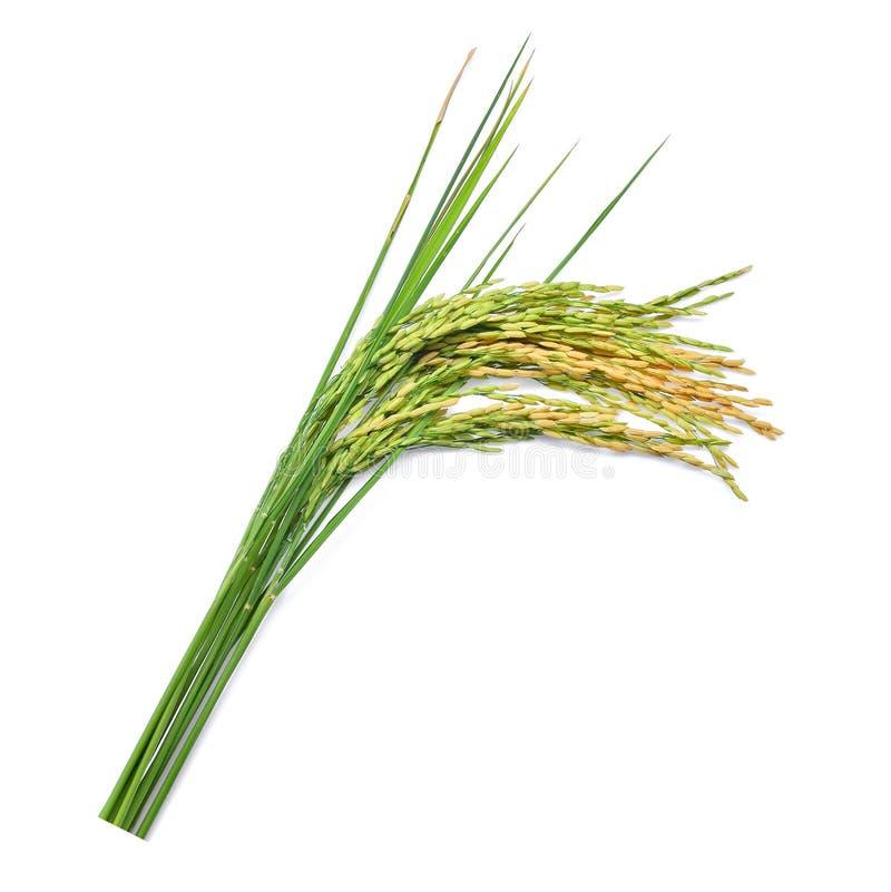Arroz de arroz verde aislado en blanco imagen de archivo