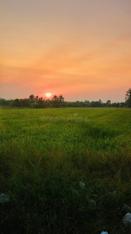 Arroz de Tailandia foto de archivo libre de regalías