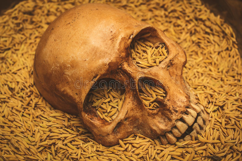 Arroz Del Cráneo Y De Arroz, Aún Vida Foto de archivo - Imagen de ...