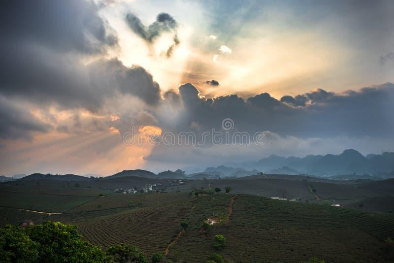 Arroz del valle de la salida del sol a principios de fotos de archivo