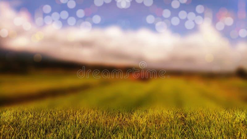 arroz en los campos con un bello efecto blur bokeh fotos de archivo libres de regalías