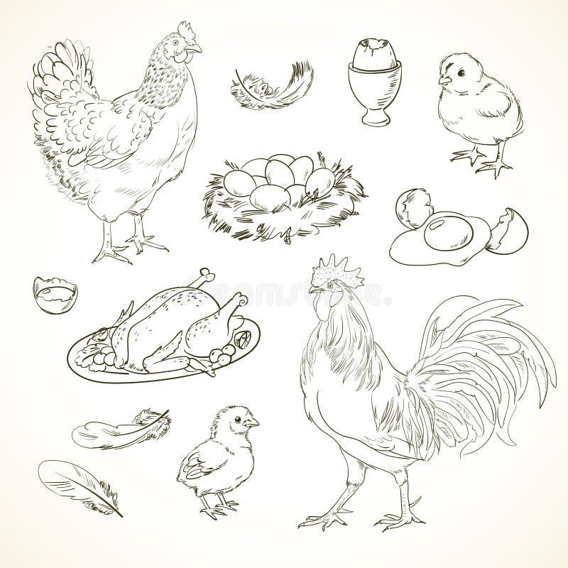 Artículos del pollo del dibujo a pulso ilustración del vector