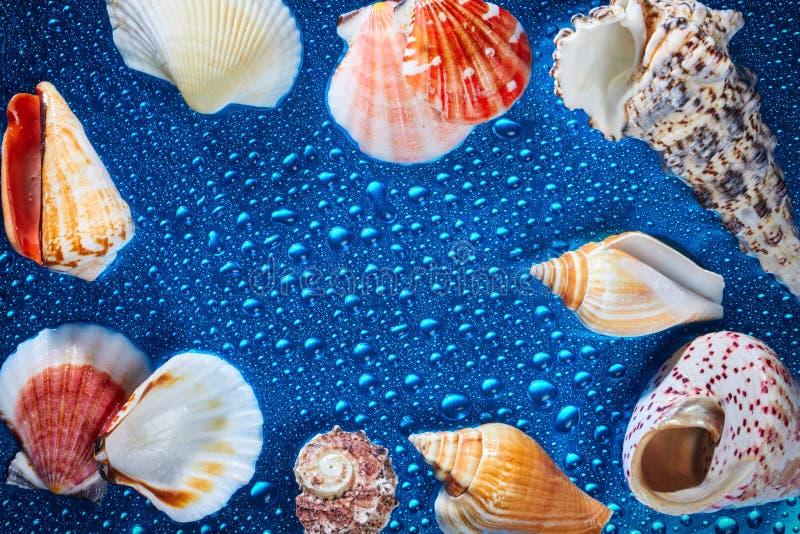 Artículos marinos en fondo mojado foto de archivo libre de regalías