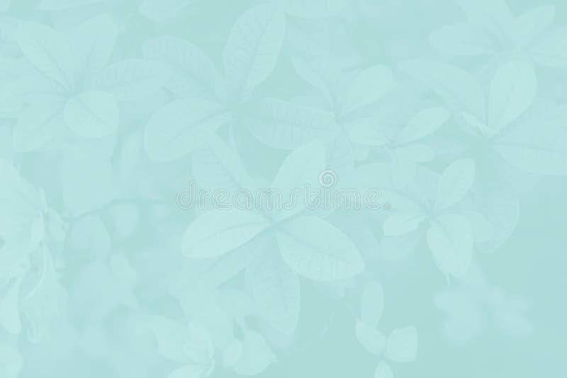 Art Abstract deixa o teste padrão fotografia de stock royalty free
