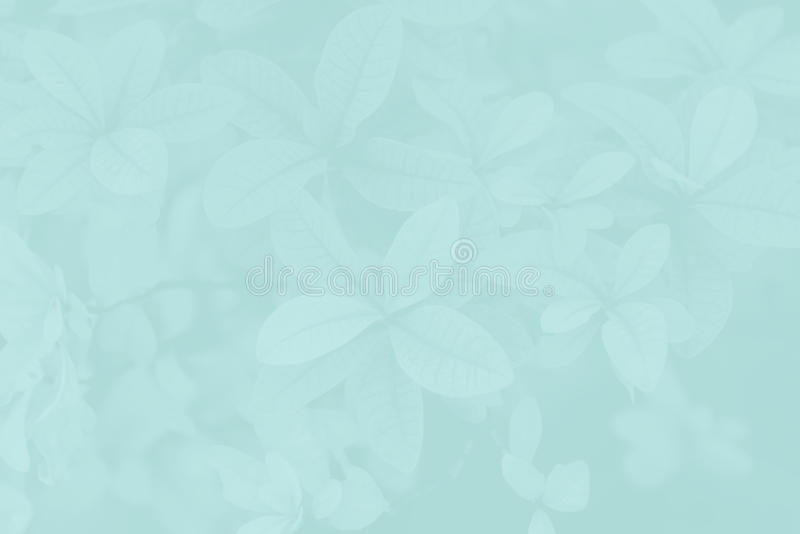 Art Abstract leaves pattern. For Background Wallpaper royalty free stock photography