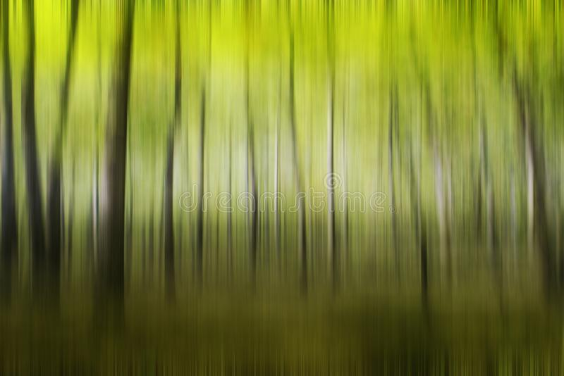 Art abstract motion blurred of oak tree in the summer forest.. Art abstract motion blurred of oak tree in the summer forest royalty free stock photo