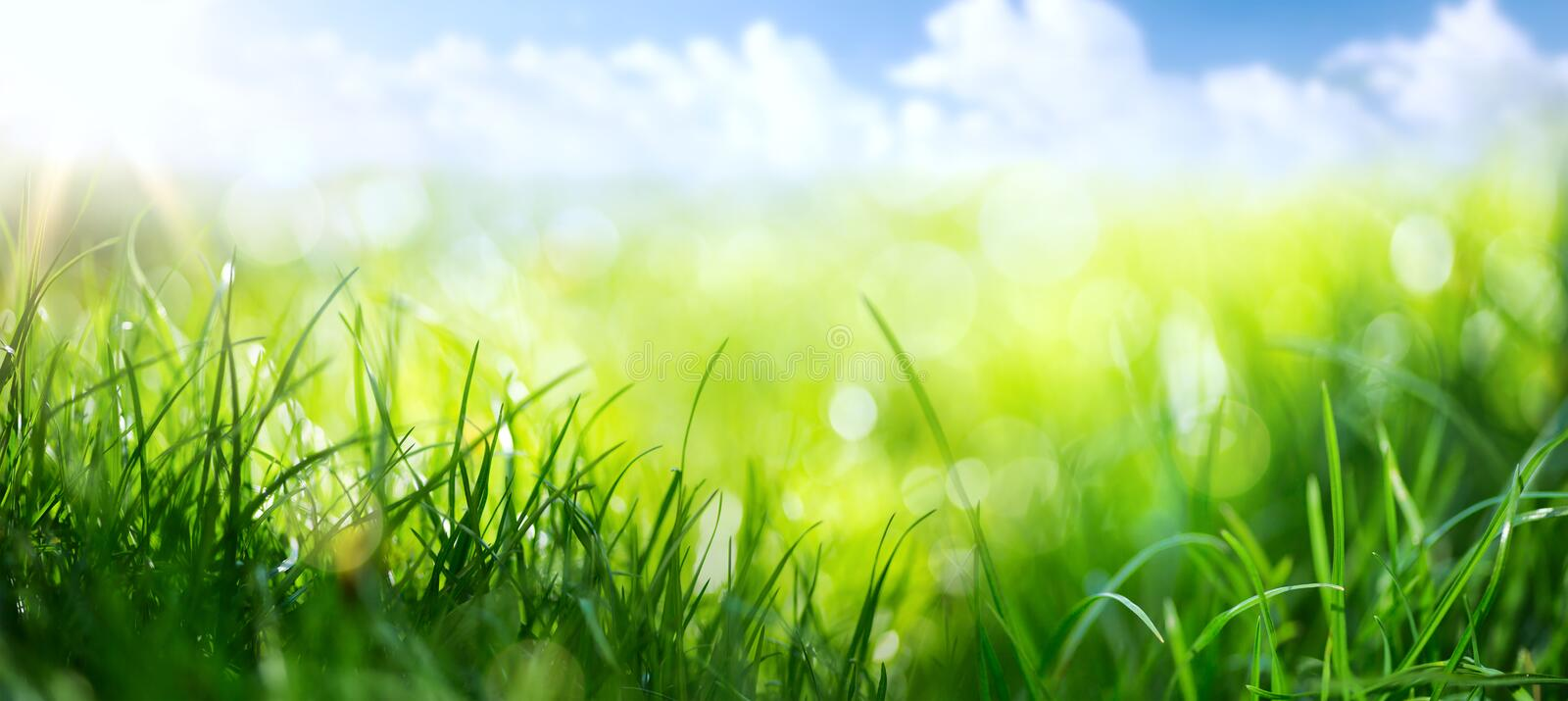 Art abstract spring background or summer background with fresh g. Abstract spring background or summer background with fresh grass royalty free stock images