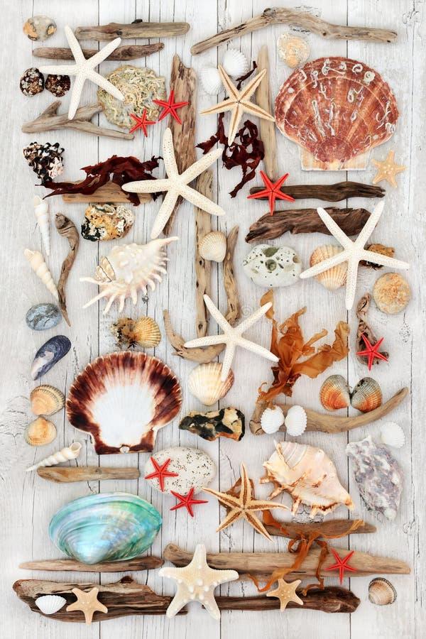 Art abstrait de coquillage et de bois de flottage photos stock