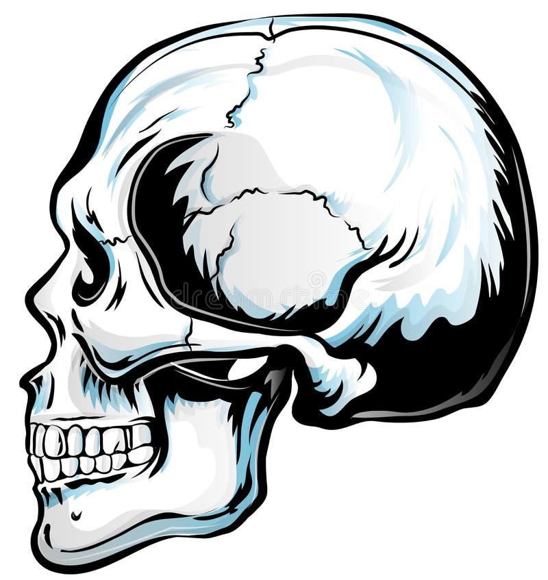 Art anatomique de vecteur de crâne illustration libre de droits