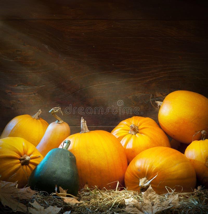 Art autumn Pumpkin thanksgiving background stock photo