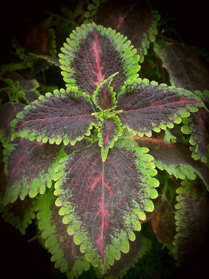 Art av växten arkivbilder