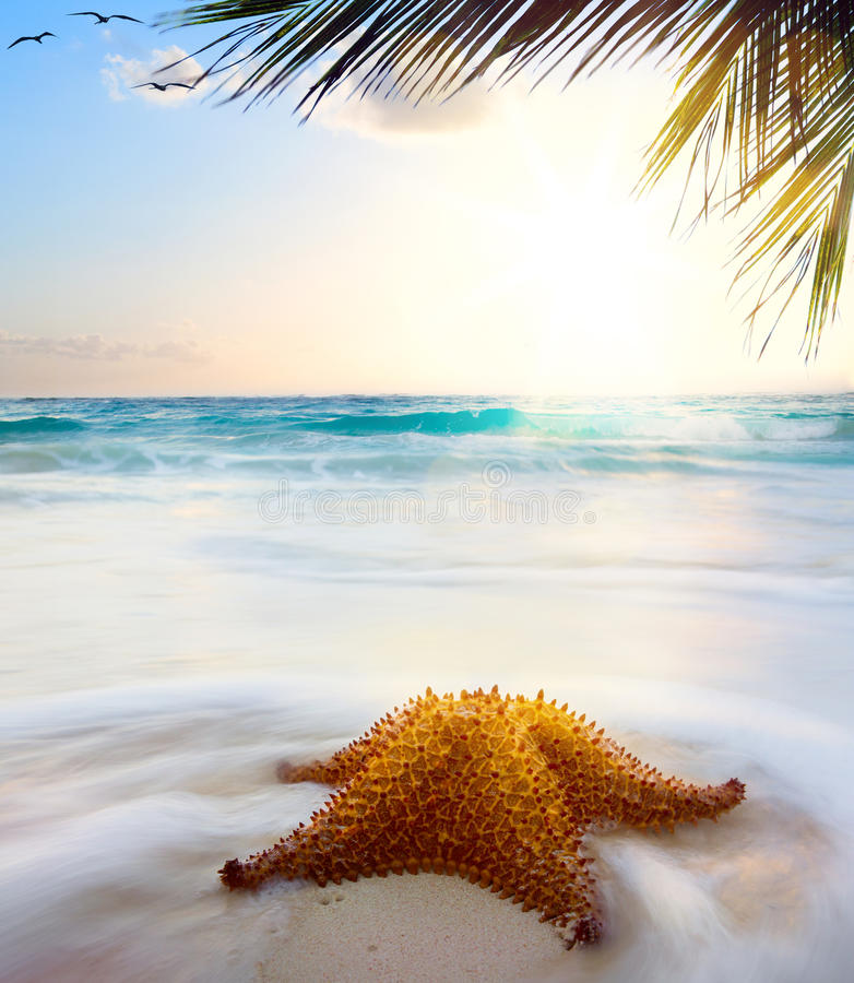 Caribbean Beach: Art Beautiful Caribbean Beach In Sunset Time Stock Photo