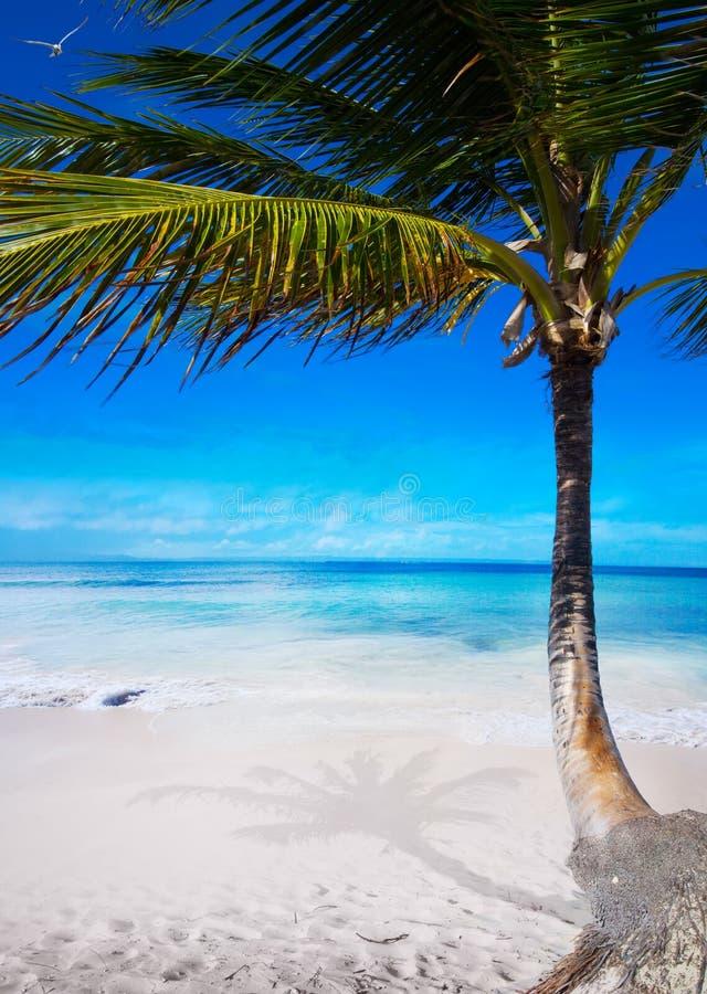Download Art Beautiful  Caribbean Tropical Sea Beach Stock Photo - Image of coast, plant: 37140102