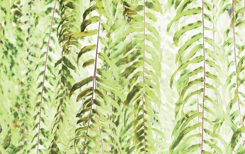 Art of beautiful green fern leaves use for abstract image. royalty free stock photo