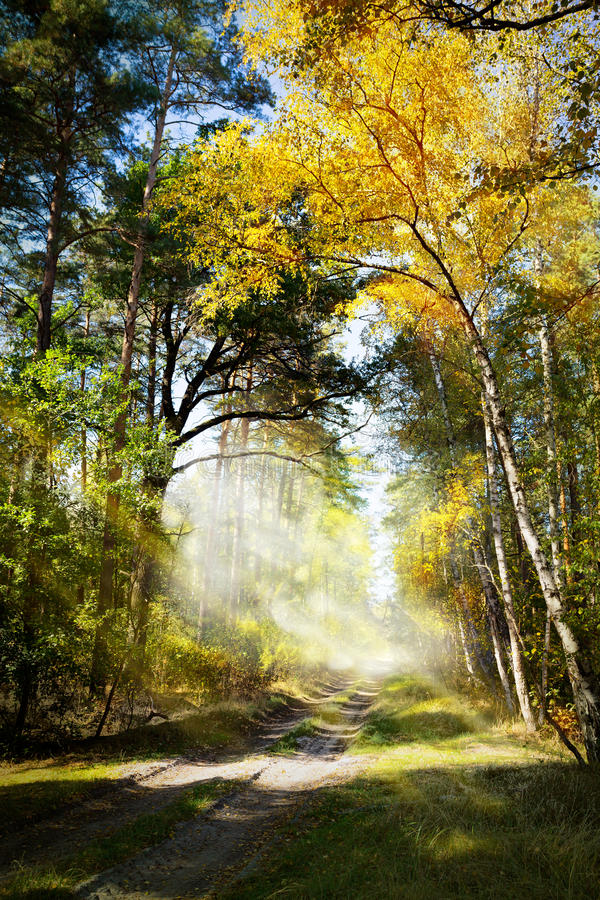 Art Beautiful-Morgen im Herbstwald stockfoto