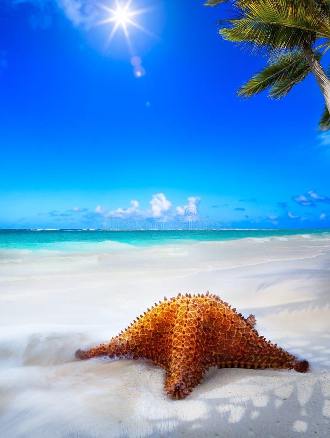 Art Beautiful-overzees strand op een Caraïbisch eiland royalty-vrije stock fotografie