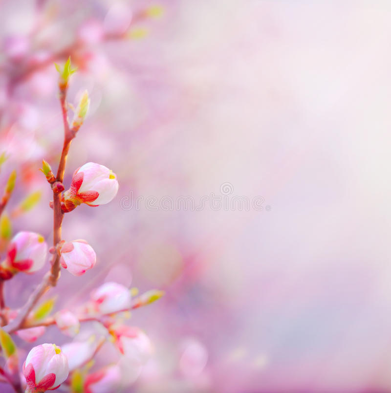 Free Art Beautiful Spring Blossoming Tree On Sky Background Royalty Free Stock Photography - 28846097