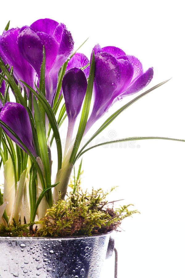 Download Art Beautiful Spring Flowers Isolated Background Stock Photo - Image: 23614594