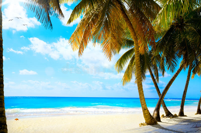 Download Art  Beautiful Untouched Tropical Sea Beach Stock Image - Image: 37734345