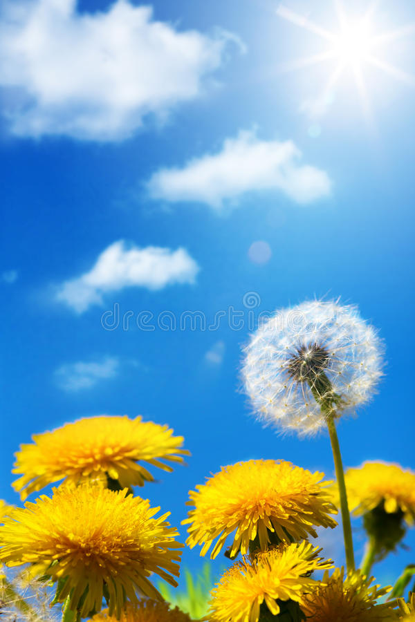 Art Beautiful vår eller sommarblommabakgrund royaltyfria foton