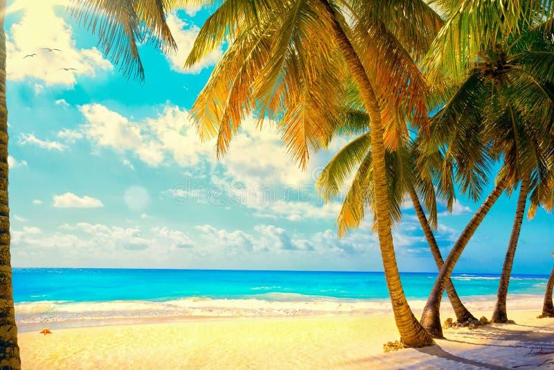 Art Beautiful-zonsondergang over het overzees met een mening bij palmen op wh stock afbeelding