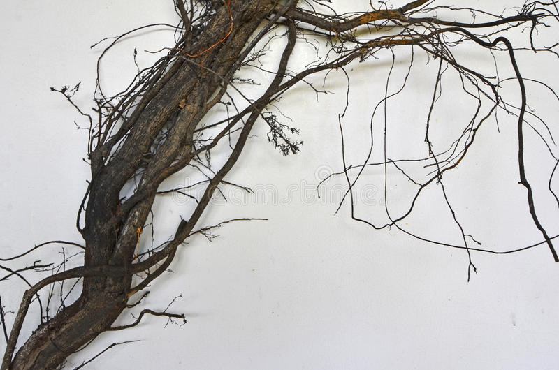 Art of black roots. On white background stock images
