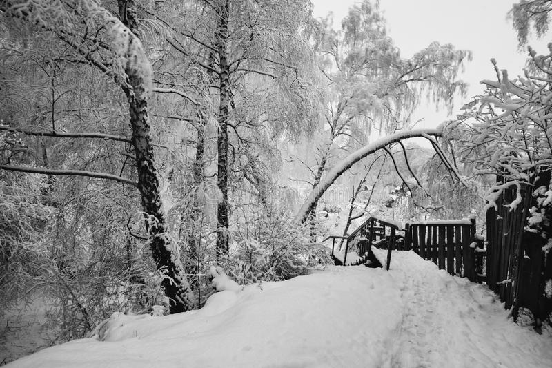 Download art black and white photography winter landscape stock photo image of magic