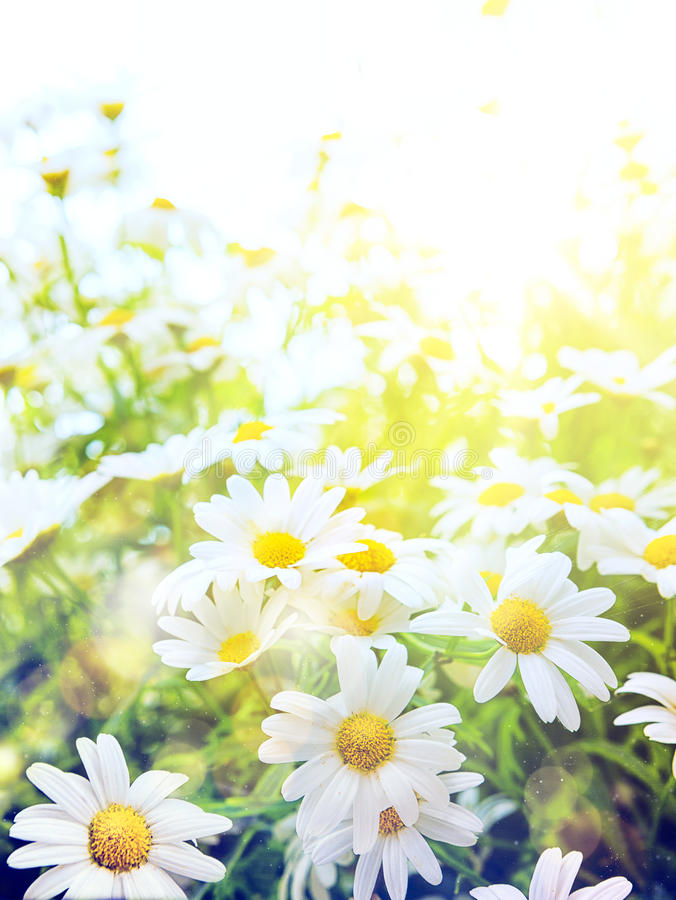 Art Bright summer flowers Natural background royalty free stock image