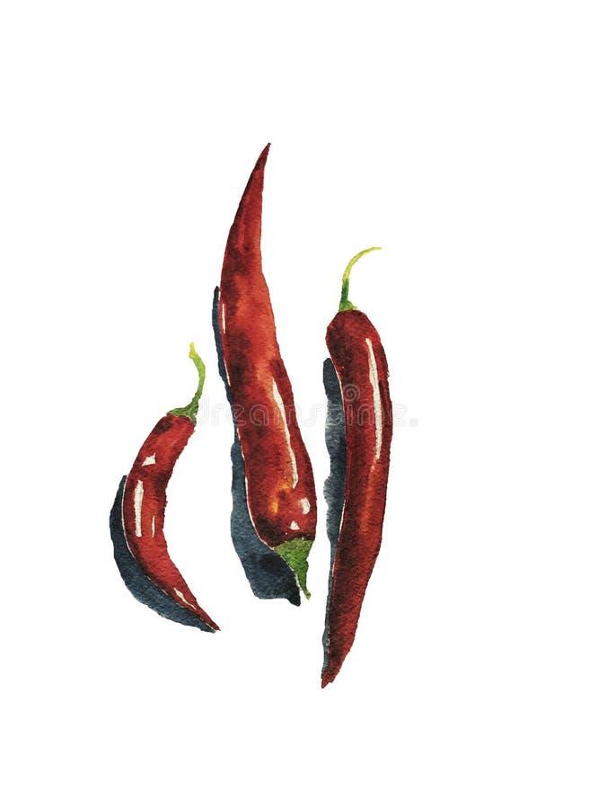 Art d'aquarelle de trois poivrons de piments L'art peut être employé pour la conception de menu image libre de droits