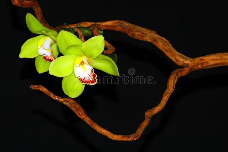 Art d'orchidée photographie stock libre de droits